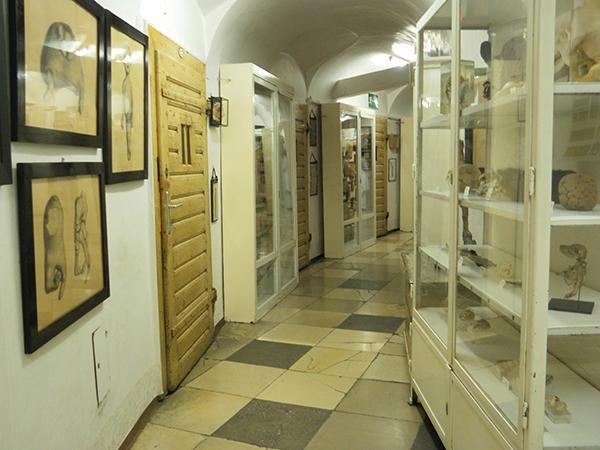Narrenturm Museum